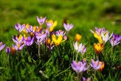 De lente in München opnieuw stock foto