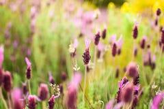 De lente maakt de installaties prachtig bloeien Royalty-vrije Stock Afbeeldingen