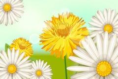 De lente, madeliefje bloeit paardebloemen, achtergrond, beeldverhaalstijl, vector, illustratie, vlieger, geïsoleerde banner, vector illustratie
