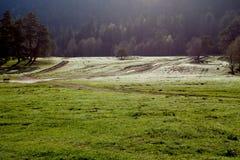 De lente medaow onder de zon royalty-vrije stock afbeeldingen