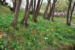 De lente met kleurrijke bloemen in het hout Royalty-vrije Stock Afbeeldingen