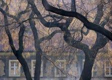 De lente mistige landskape met de bouw en donkere bomen Royalty-vrije Stock Fotografie