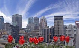 De lente in Montreal royalty-vrije stock foto's