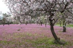De lente mooi en kleurrijk landschap Stock Foto