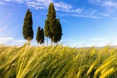 De lente in mooi Toscanië Royalty-vrije Stock Fotografie