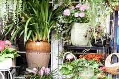De lente mooie bloemen in bloempot Stock Foto's
