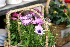 De lente mooie bloemen in zondag royalty-vrije stock fotografie
