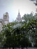 De lente in MSU Royalty-vrije Stock Foto's