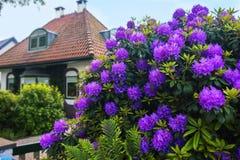 De lente Nederlandse tuin Royalty-vrije Stock Afbeeldingen