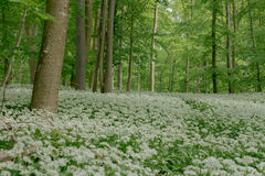 De lente in Nedersaksen Stock Afbeelding