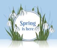 De lente om kader met sneeuwklokje Stock Foto's