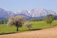 De lente in Oostenrijk Stock Afbeeldingen