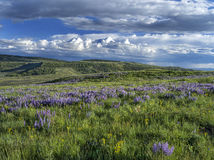 De lente op Casper Mountain Wyoming Stock Foto's