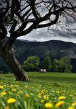 De lente op de heuvels stock foto's