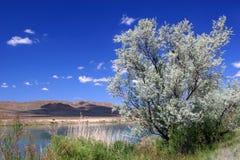 De lente op de rivier. Stock Foto's