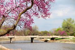 De lente op de rivier Royalty-vrije Stock Fotografie