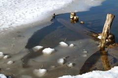 De lente op de rivier Stock Foto's