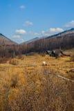 De lente op Road circum-Baikal aan het zuiden van Meer Baikal Stock Fotografie