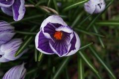 De lente is opgesprongen stock afbeeldingen