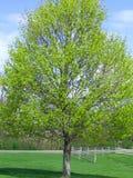 De lente is opgesprongen Stock Foto's