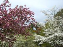 De lente is opgesprongen royalty-vrije stock foto