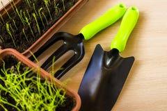 De lente opleiding van jonge planten voor de de zomerperiode Stock Foto