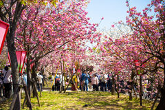De lente in Osaka Stock Fotografie