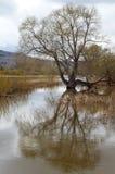De lente overstromende rivier Royalty-vrije Stock Fotografie