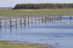 De lente overstroming in de weide Royalty-vrije Stock Afbeeldingen