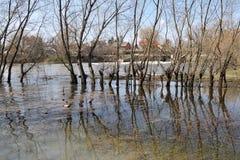 De lente overstroming op de rivier Royalty-vrije Stock Foto