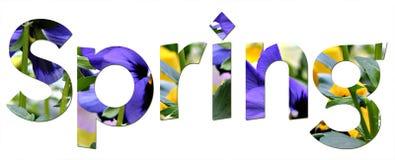 De lente pansies Royalty-vrije Stock Afbeeldingen