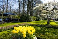 De lente in park - het bloeien van tulpen, witte kers komt tot bloei, mensen die of in park lopen zitten royalty-vrije stock foto