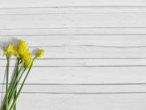 De lente of Pasen gestileerde voorraadfotografie met gele gele narcisbloemen, Narcissen De sjofele oude witte houten vlakke achte Royalty-vrije Stock Fotografie