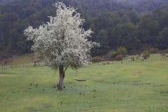 De lente in Patagonië Royalty-vrije Stock Foto's