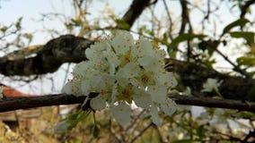 De lente plumblossoms, aard royalty-vrije stock foto