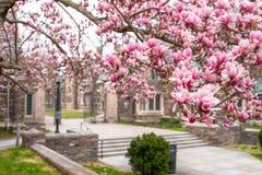 De lente in Princeton NJ royalty-vrije stock foto's