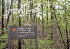 In de lente, reist een kleine weg door bloeiende Kornoeljes en groene bladeren royalty-vrije stock afbeeldingen
