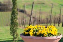 De lente is rond Stock Foto