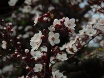 De lente` s Kleuren Stock Afbeelding
