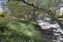 De lente in Schotland Stock Afbeelding