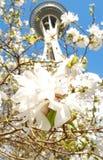 De lente in Seattle. Royalty-vrije Stock Foto's