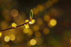 De lente, seizoen van vernieuwing Stock Foto's