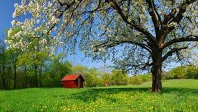 De lente in Slowakije Royalty-vrije Stock Foto's