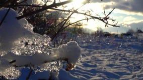 De lente smeltende sneeuw in het park stock video