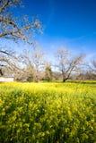 De lente in Sonoma, Californië stock foto's