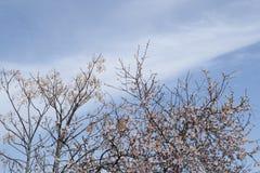 De lente in Spanje Royalty-vrije Stock Afbeelding