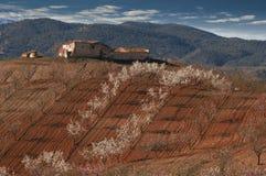 De lente in Spanje Royalty-vrije Stock Fotografie