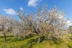 De lente in Spanje Royalty-vrije Stock Foto's