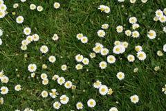 De lente in stad Royalty-vrije Stock Foto's