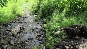 De lente stroomt de Rivier stock footage